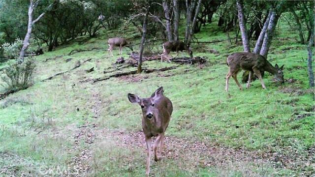 71600 Interlake Road, Bradley CA: http://media.crmls.org/medias/055a2908-0181-460d-ab28-a8eea1765870.jpg