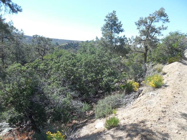 0 Old Oak Springs/Desert Front, Pinon Hills CA: http://media.crmls.org/medias/079a1b6d-cc83-4b52-ac62-d0dcbab1a47c.jpg