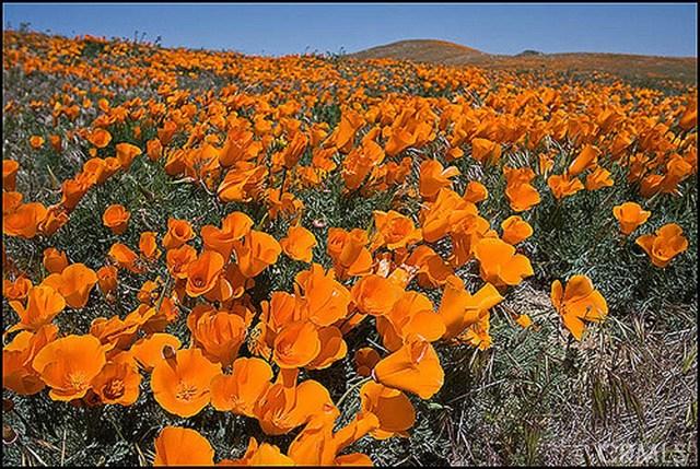 0 Vac/Cor Avenue G2/136 Stw, Antelope Acres CA: http://media.crmls.org/medias/0b612398-de7a-4945-bd42-4802424db36b.jpg