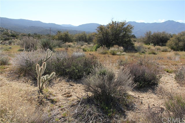 0 Jeraboa / Pozo Road, Mountain Center CA: http://media.crmls.org/medias/183a316d-78b3-48a2-896e-98bb93300e29.jpg