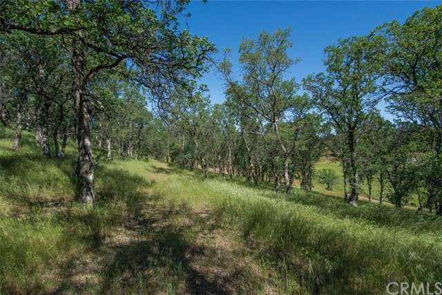 Land for Sale at 16715 Robin Hood Lane Cottonwood, California 96022 United States