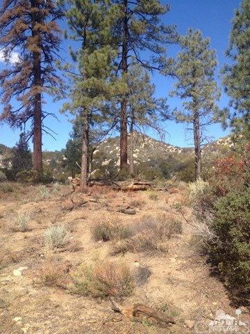 0 Table Mountain Rd. -Lot 20, Mountain Center CA: http://media.crmls.org/medias/2ce40a0f-21f3-4b8e-8e16-b5e1c99d7f49.jpg