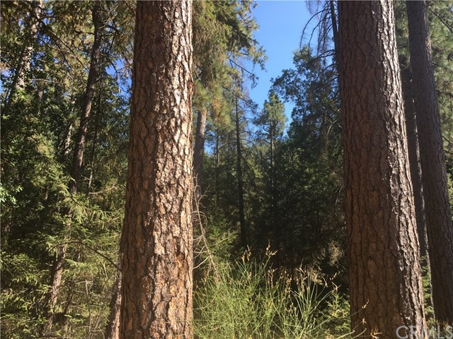 9757 Harrington Flat Road, Cobb CA: http://media.crmls.org/medias/3723689d-3e64-4371-aa52-7d3eb5d4cef2.jpg