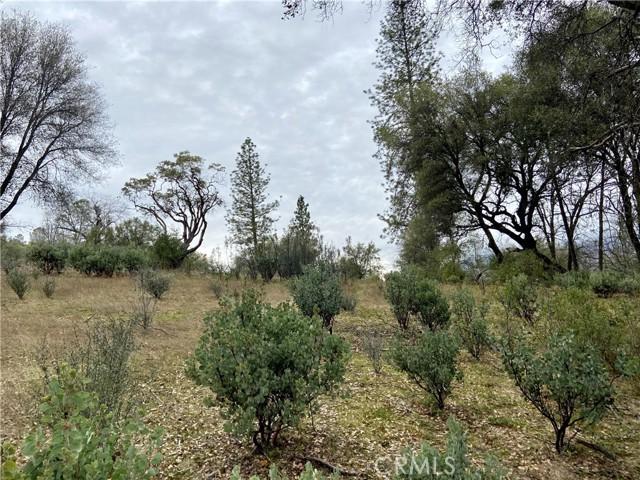 4907 Stumpfield Mountain Road, Mariposa CA: http://media.crmls.org/medias/40bd1e01-bffd-4b1c-b529-a85a26bbf17f.jpg