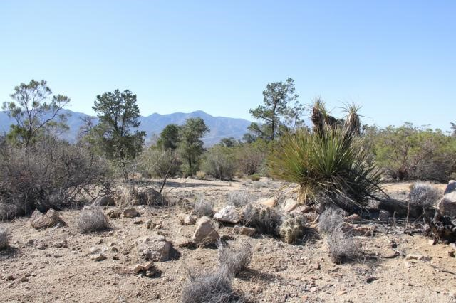0 Lot 05 Jeraboa Road Mountain Center, CA 92561 - MLS #: SW17227434