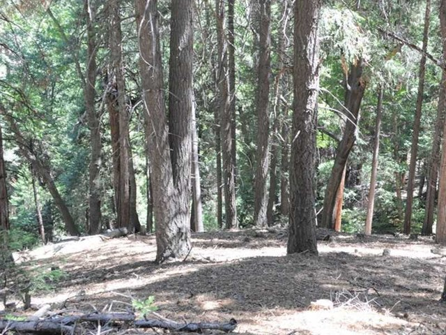 Additional photo for property listing at 0 Mojave River Road  Cedarpines Park, California 92322 United States