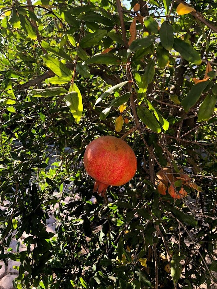 14979 Camellia Drive, Fontana CA: http://media.crmls.org/medias/656ca5be-5658-4864-bae3-3458f4d36785.jpg
