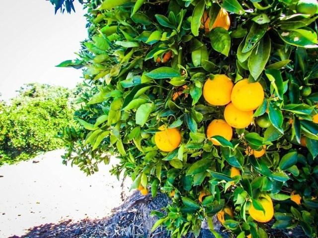0 Sandia Creek Dr, Temecula, CA  Photo 4