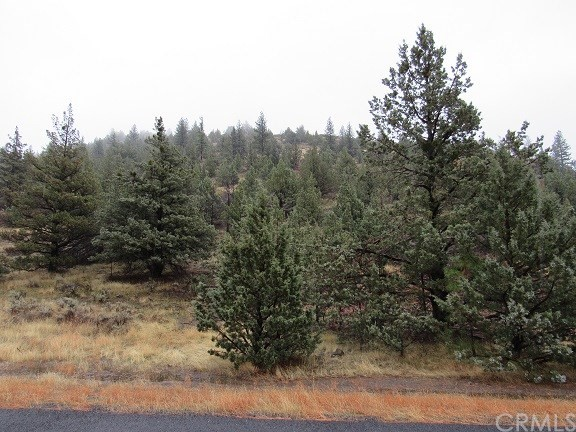 Single Family for Sale at 0 Lot 113 Mount Blanch Drive Weed, California 96094 United States