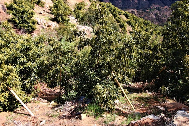 0 Carancho Rooad, Temecula, CA  Photo 15