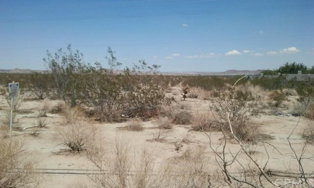 Additional photo for property listing at 0 Chollita N  Joshua Tree, California 92252 United States
