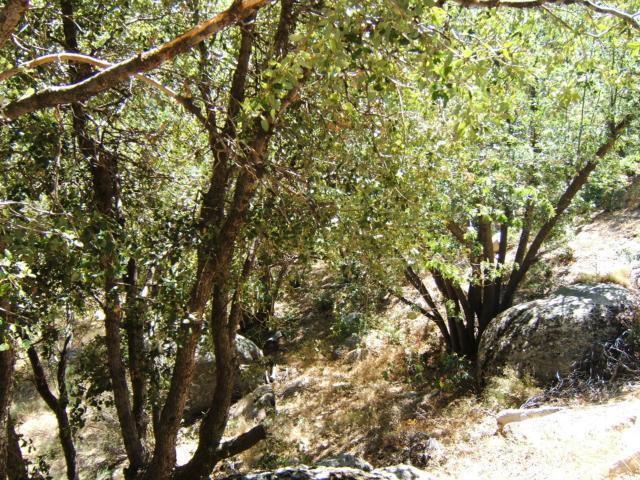 0 Scola Lane, Arrowbear CA: http://media.crmls.org/medias/75cc2a4e-4061-4a3c-a0ec-9d3bcdf42649.jpg