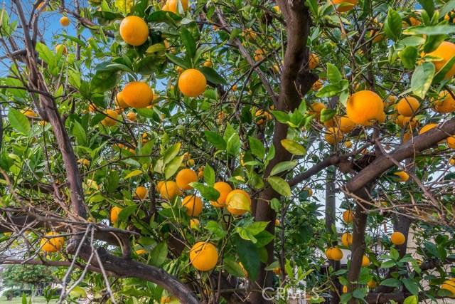 706 S Citron St, Anaheim, CA 92805 Photo 45
