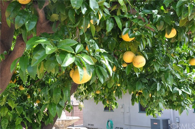 9791 Harvest Ln, Anaheim, CA 92804 Photo 15