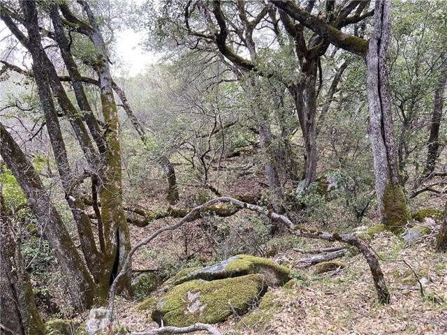 4907 Stumpfield Mountain Road, Mariposa CA: http://media.crmls.org/medias/7b780ddb-7035-4b56-b7c5-60d0c3d08b66.jpg