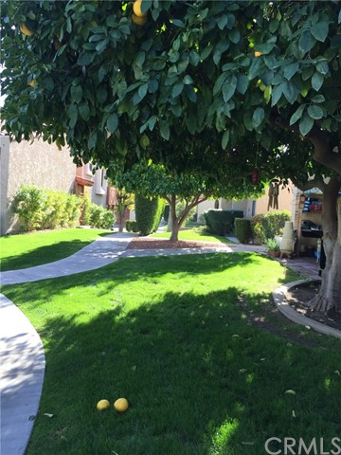 646 S Calle Petunia, Palm Springs CA: http://media.crmls.org/medias/87690582-e378-4463-a913-228bd82ab79b.jpg