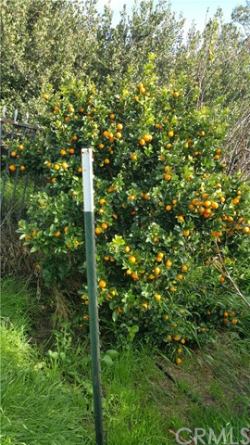 2007 N San Marcos Road, Santa Barbara CA: http://media.crmls.org/medias/9ffbf188-cb86-4e15-8e99-f6d08c373970.jpg