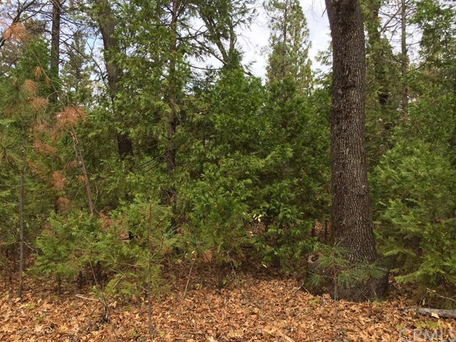 0 Papya Road Forest Ranch, CA 95942 - MLS #: SN18044422