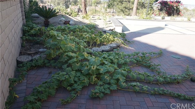 13745 Moonshadow Place, Chino Hills CA: http://media.crmls.org/medias/a1ad770a-eee8-4418-ac52-2bbdef6665c8.jpg