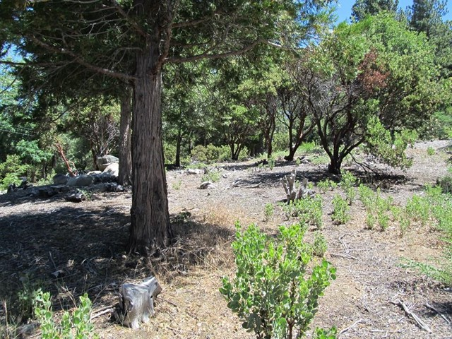 Additional photo for property listing at 0 Tripp Lane  Angelus Oaks, California 92305 United States