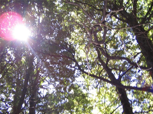 0 Forest Glade, Berry Creek CA: http://media.crmls.org/medias/a9b61e1f-9b46-449a-843a-eda44ae26653.jpg