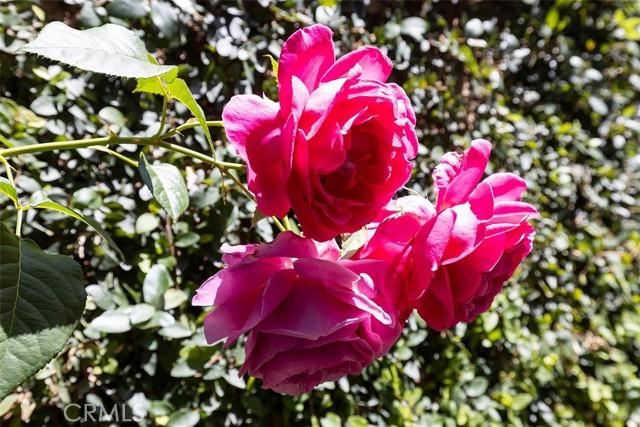 25 Peach Blossom, Irvine CA: http://media.crmls.org/medias/aa62ad50-4f1d-4d25-a315-290c6dbcb86b.jpg