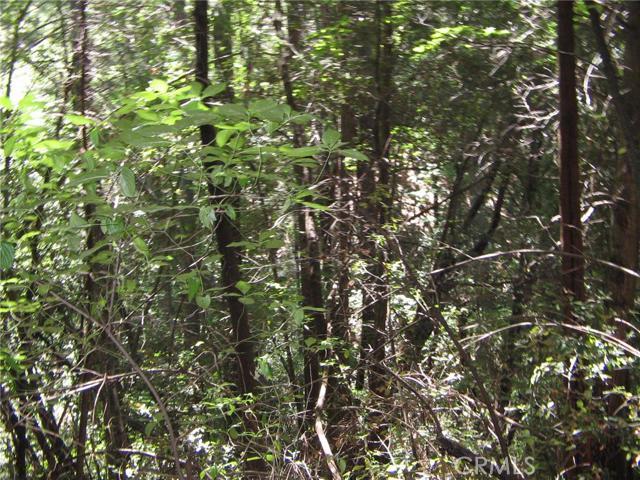 0 Forest Glade, Berry Creek CA: http://media.crmls.org/medias/af0549b4-b6b6-42ac-99b4-67ea168eb9ac.jpg