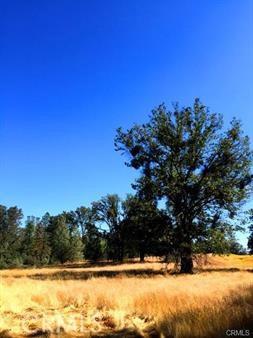 5887 Vineyard Lane, Mariposa CA: http://media.crmls.org/medias/b08a60c5-584e-4516-a3cb-257db5b5b837.jpg