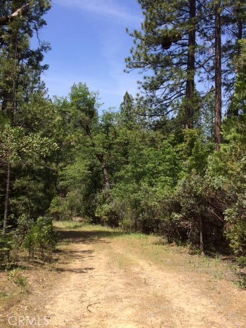 0 Graystone Lane, Berry Creek CA: http://media.crmls.org/medias/b4bcb539-9f3f-4110-a6a8-19865434db92.jpg