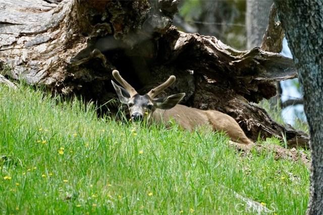 0 Del Valle Road, Livermore CA: http://media.crmls.org/medias/bc688b17-3017-4426-b94f-c5e4c369fe2d.jpg