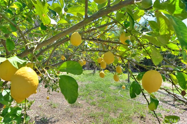 33385 Oak Glen Road, Yucaipa CA: http://media.crmls.org/medias/be9a26f1-03bd-449a-8294-6fc9d1d1c726.jpg