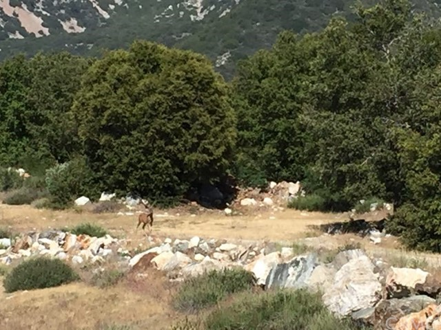 0 Glendora Ridge Rd, Mt Baldy CA: http://media.crmls.org/medias/c8f68a2c-3e78-4345-ab08-845c9f3cd373.jpg
