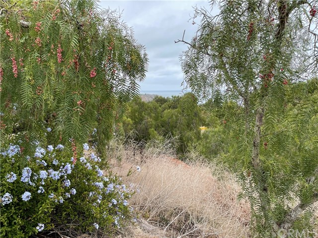 30 Peppertree Drive, Rancho Palos Verdes CA: http://media.crmls.org/medias/cf7fae20-87fd-443b-9b0b-aaf5a7192835.jpg