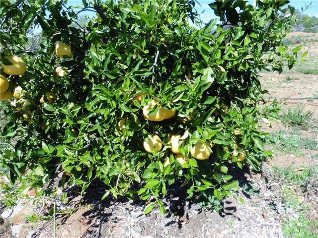 3911 Aspen Road, Fallbrook CA: http://media.crmls.org/medias/d422d659-aa0f-4459-9885-e8e83d253f24.jpg