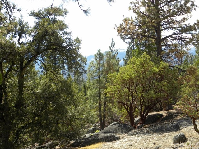 0 Pine Cone North Fork, CA 93643 - MLS #: YG17227713