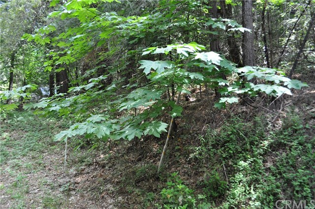 0 Treelined Lane, Berry Creek CA: http://media.crmls.org/medias/d73b87f1-b018-46f9-a0dd-11a8d038d48f.jpg
