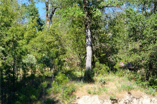 50 Dogwood Creek Drive Bass Lake, CA 93604 - MLS #: YG17135347