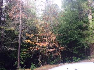 0 Forest Glade, Berry Creek CA: http://media.crmls.org/medias/e3294d68-a0c0-45b6-a152-3cc05cd09e38.jpg