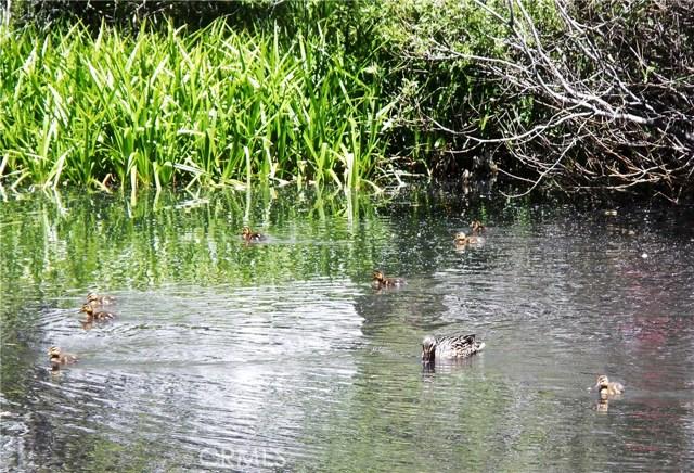 39950 7 Oaks Road, Angelus Oaks CA: http://media.crmls.org/medias/e39fe820-2956-443a-a619-de9778f9dfa9.jpg