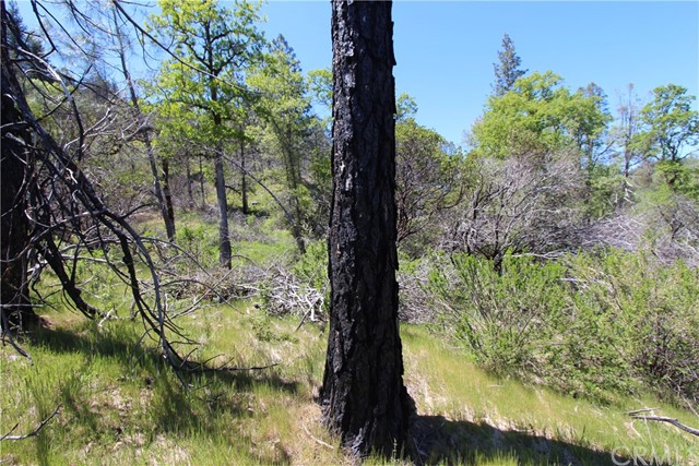 14177 Lema Lane, Cobb CA: http://media.crmls.org/medias/ee7ccd5f-f6c8-4532-9902-ddcbd02db3ff.jpg