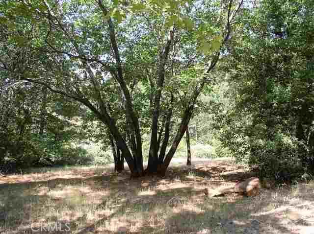 5177 Toyon Lane, Paradise CA: http://media.crmls.org/medias/f01d60ac-e22b-40ac-91e1-7d65553daf11.jpg