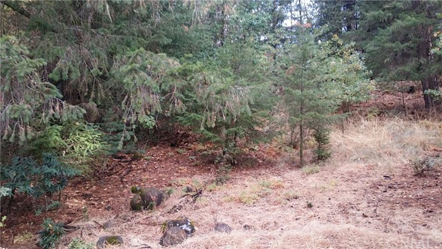 Additional photo for property listing at 16229 Ponderosa Drive  Cobb, California 95426 United States