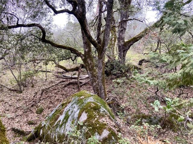 4907 Stumpfield Mountain Road, Mariposa CA: http://media.crmls.org/medias/f3a13b75-16b2-432e-a780-cb162dfabd78.jpg