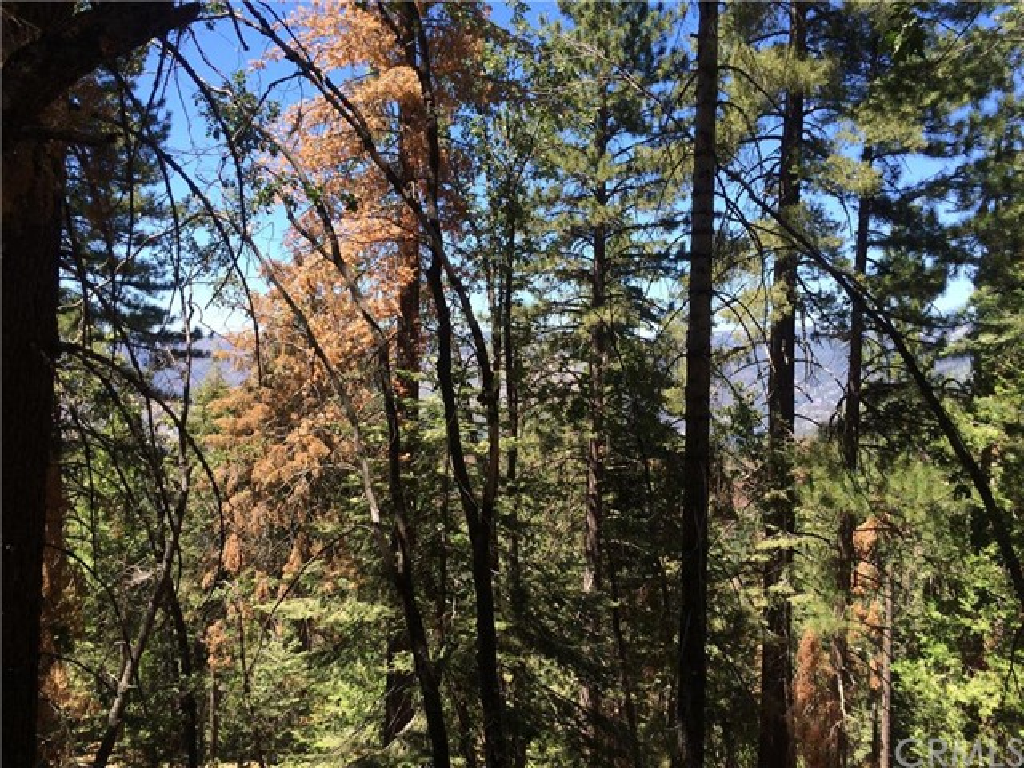 Single Family for Sale at 7302 Buck Brush Lane Yosemite, California 95389 United States