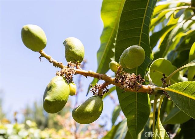 25 Peach Blossom, Irvine CA: http://media.crmls.org/medias/fb3d0f51-6ad1-4e4c-a4ab-ee6a50e958ba.jpg