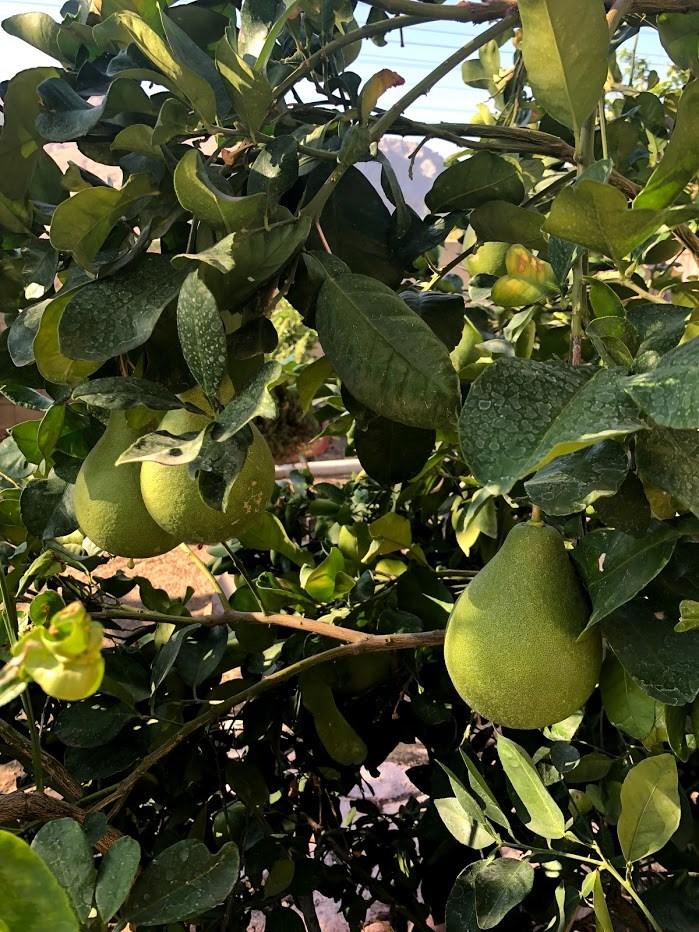 14979 Camellia Drive, Fontana CA: http://media.crmls.org/medias/fd4365fd-675d-4390-b5c2-fa6428ec8536.jpg