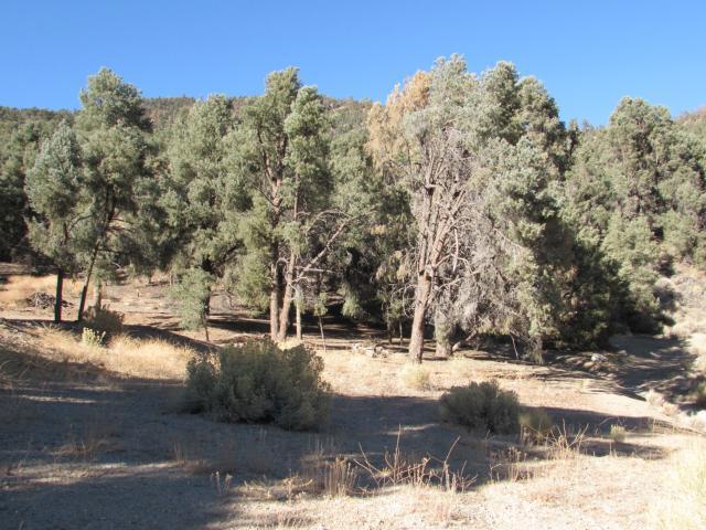 16401 Grizzly, Pine Mtn Club CA: http://media.crmls.org/mediascn/3768a731-dc6b-4c1a-8b77-a6970f0411ae.jpg