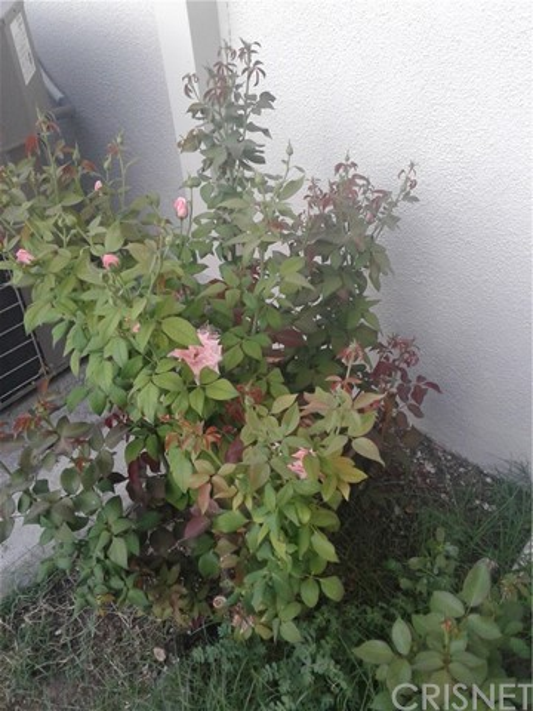 18915 Cantara Street, Reseda CA: http://media.crmls.org/mediascn/456baa50-6202-4511-a958-946d89dd7c60.jpg