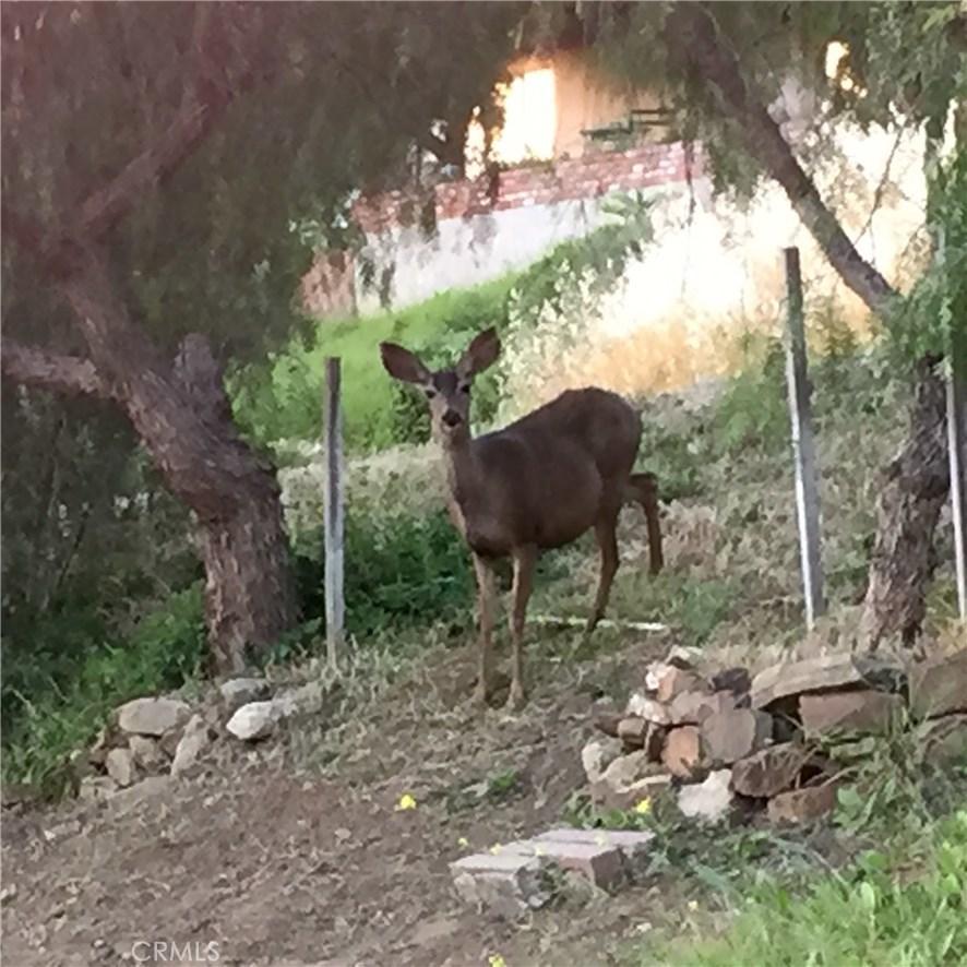 26327 FAIRSIDE ROAD, MALIBU, CA 90265  Photo 37