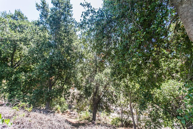 11694 Sagewood Drive, Moorpark CA: http://media.crmls.org/mediaz/2E524E2C-D7EE-4982-9C96-92556529A72F.jpg
